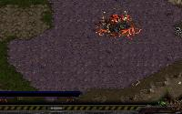 Starcraft Flash